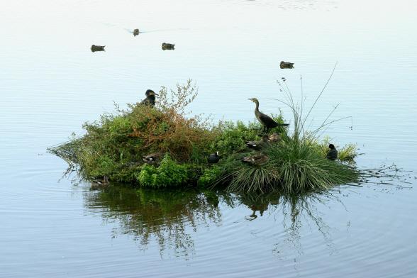 Laguna Primera de Palos